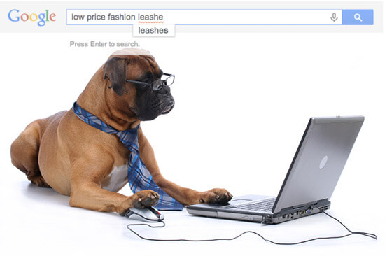 dog with laptop computer, operating search engine