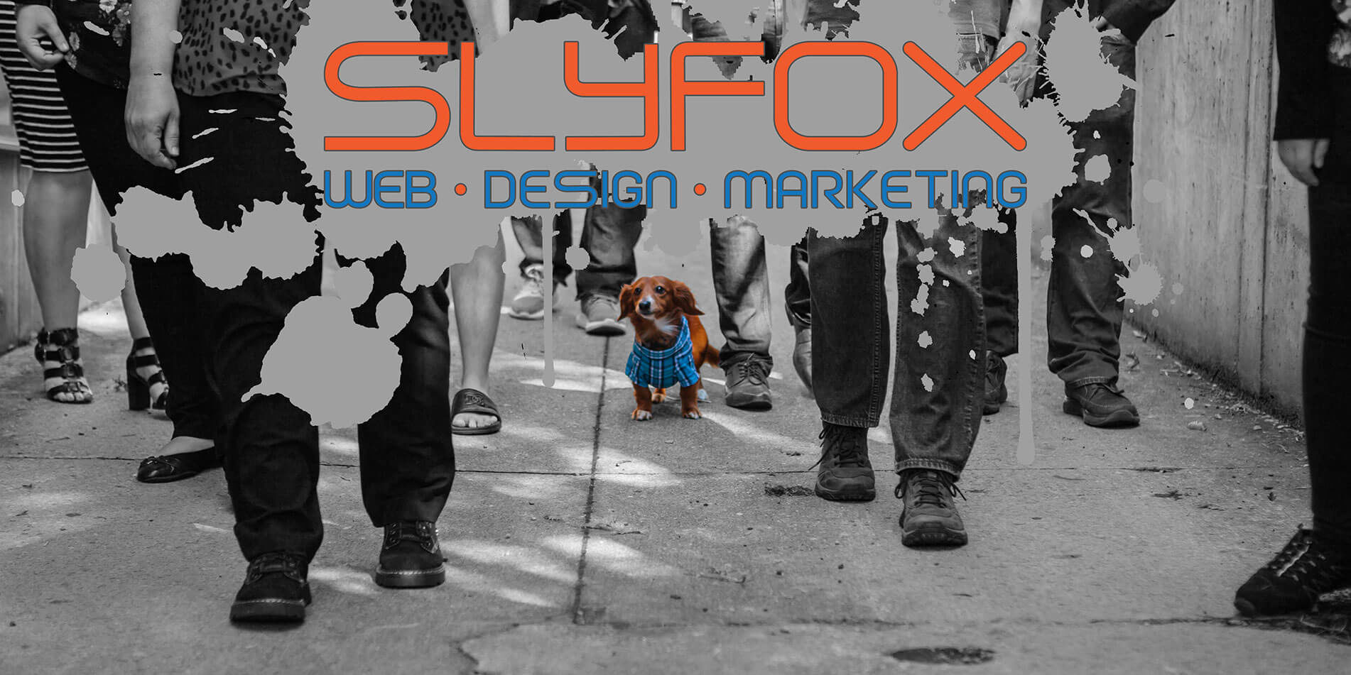 digital marketing, design team, web design team - SlyFox Web Design and Marketing